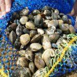海の放射能汚染 2016年の現在は?夏に流行る潮干狩りに注意!