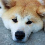 犬の認知症は何歳に発症?ご飯を食べないと脳の活動が低下するから?